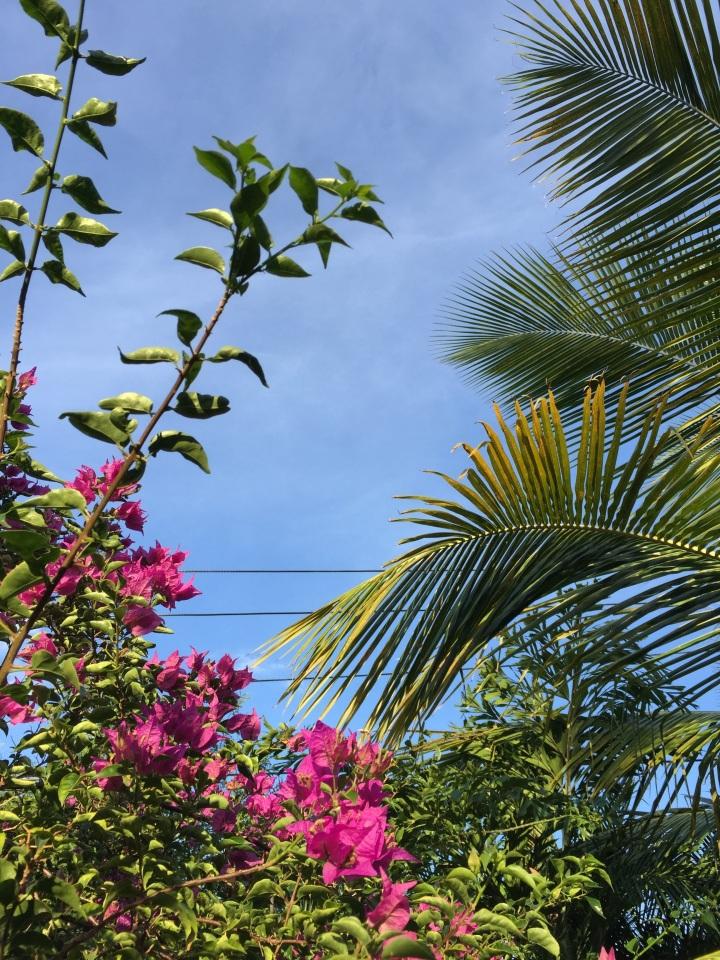 Healing in PuertoRico